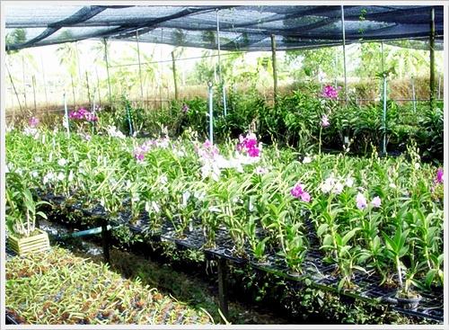 2010 05 23 Thai Orchid Nursery
