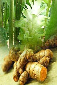 พันธุ์ไม้สร้างและสะสมน้ำมันหอมระเหย-กลิ่นหอมของไทย