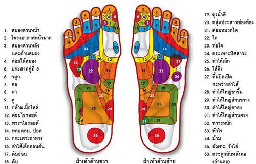 """เรียนนวดฟรี-วิธีการนวดแผนโบราณ นวดไทย """"วิธีนวดกดจุดฝ่าเท้าขั้นพื้นฐาน 1 (34 ท่า)"""""""