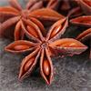 น้ำมันหอมระเหยบริสุทธิ์: จันทร์แปดกลีบ หรือโป๊ยกั๊ก Anise Star (Illicium Verum-China)