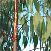 น้ำมันหอมระเหยบริสุทธิ์: ยูคาลิปตัส Eucalyptus (Eucalyptus globulus - China)