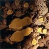 น้ำมันหอมระเหยบริสุทธิ์: ไพล Plai (Zingiber cassumunar roxb - Thailand)